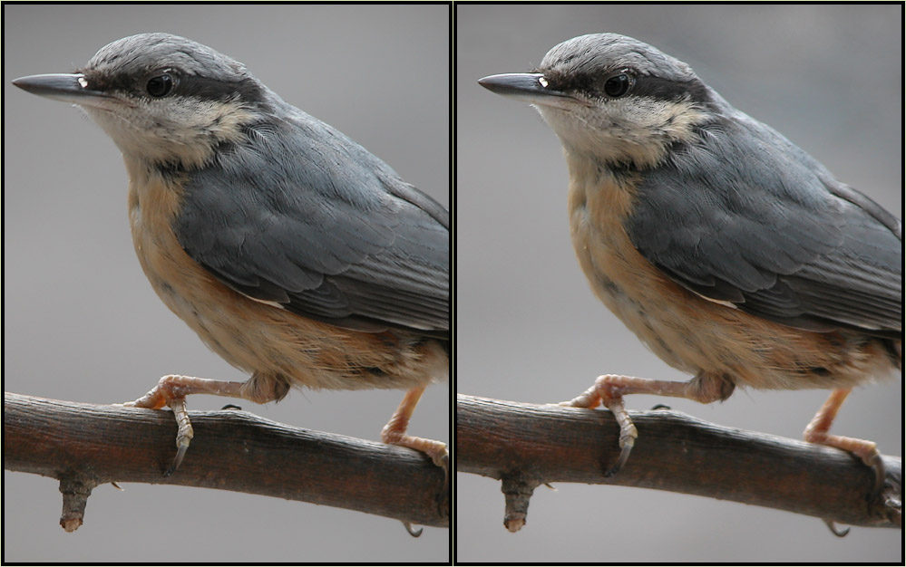 little visitor on my balcony - 3D (stereoscopic)