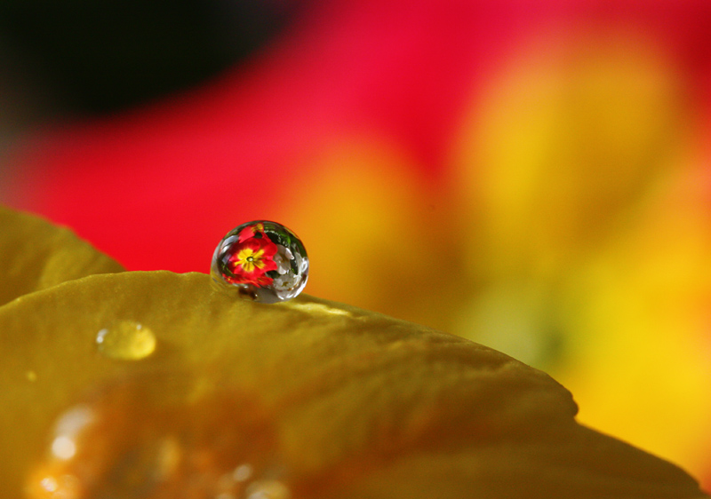 little world in one drop (2)
