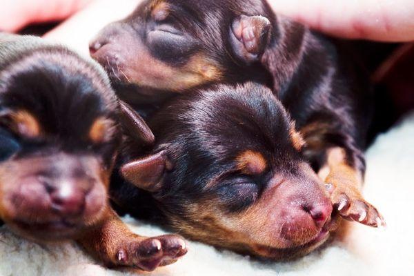 Littlest Pets