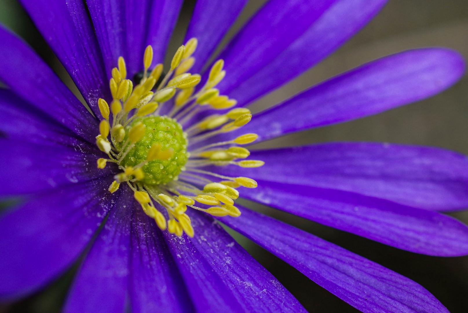 Living in a Flower