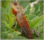*Lizard*