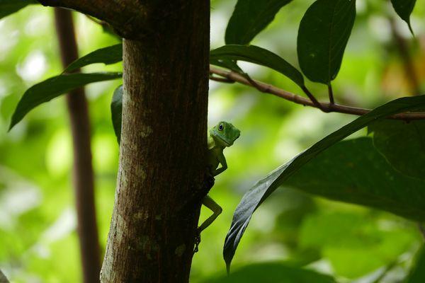 Lizard is watching me