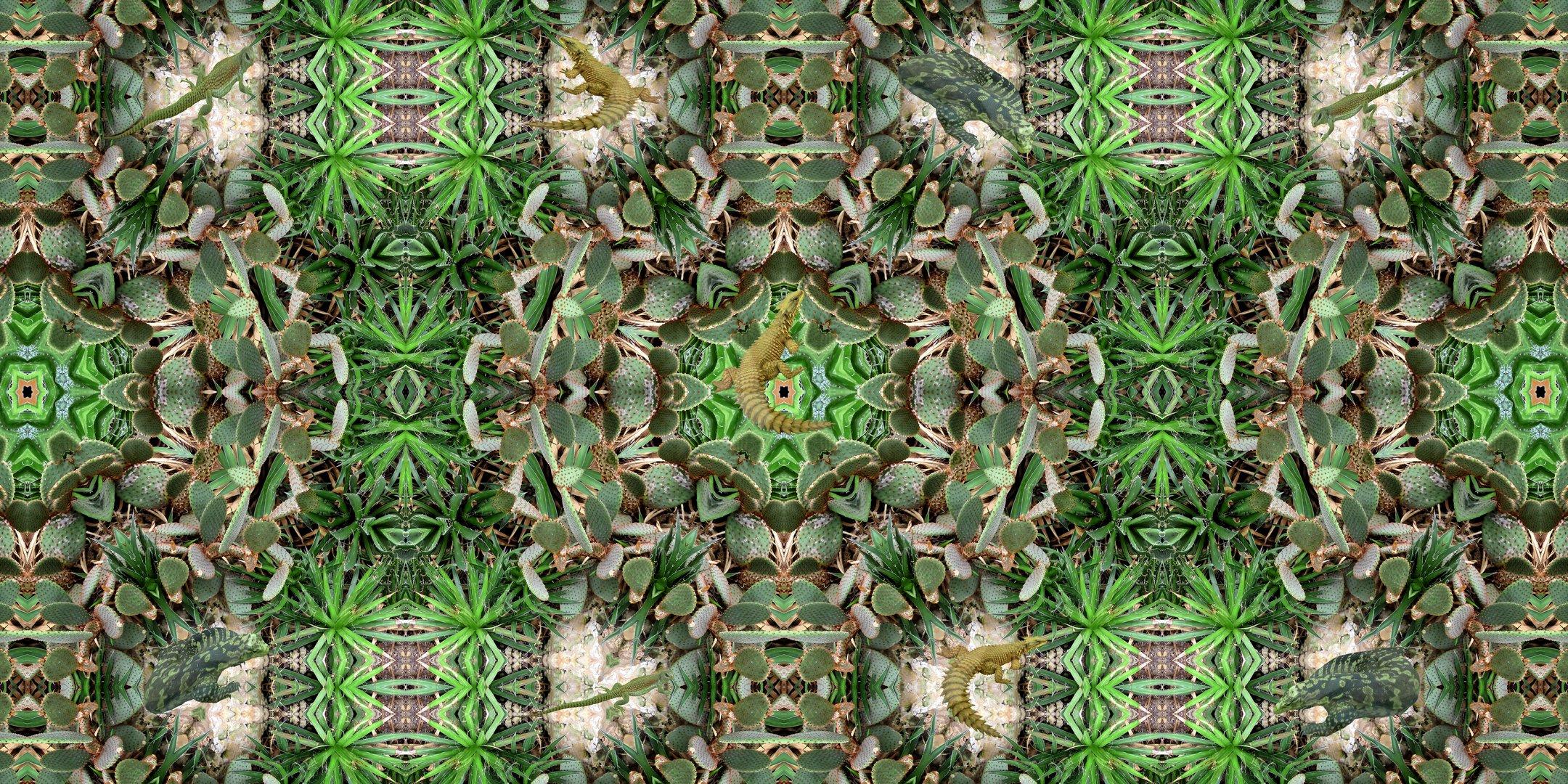 Lizards in a landscape of cactus_1