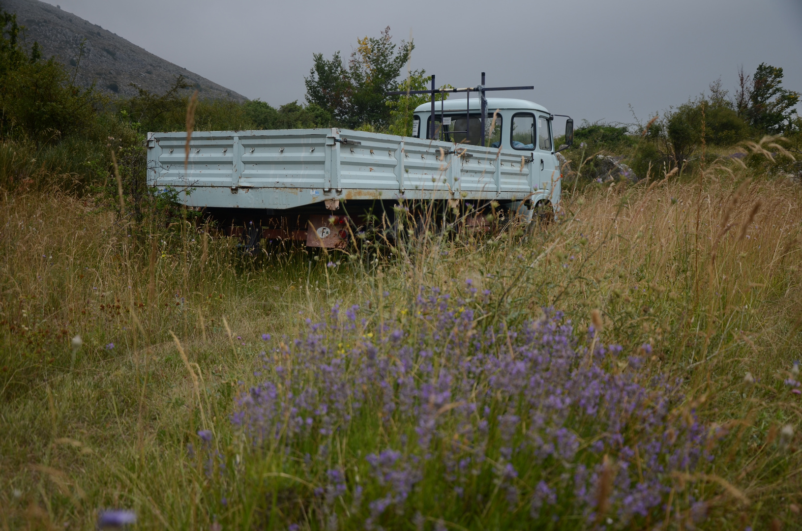 LKW neben dem Lavendelfelf