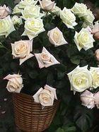 Llena de rosas