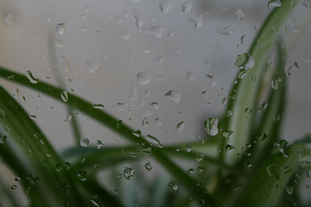 Llovía...
