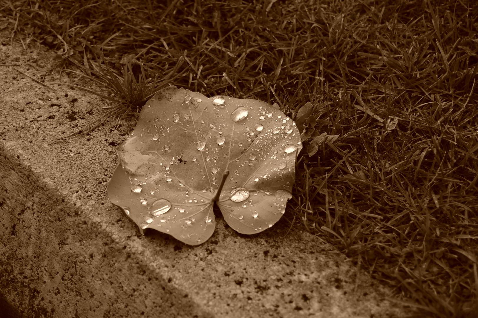 lluvia de soledad