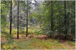 Lluvia en el bosque I (Regen im Wald I)