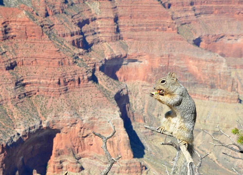 Lo scoiattolo del Gran Canyon