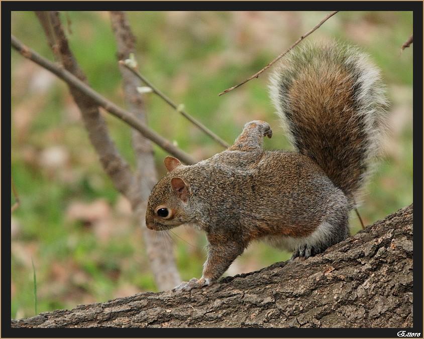 Lo scoiattolo ginnasta