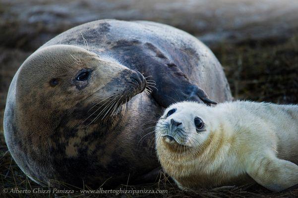 Lo sguardo di speranza di una giovane fochina...