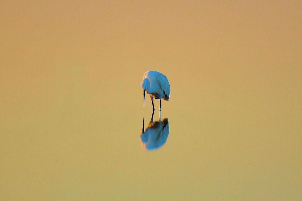 Lo specchio dorato
