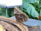 Lo spuntino della farfalla