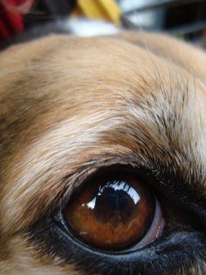 """L'oail De Mon chien """" Croquette """" :)"""