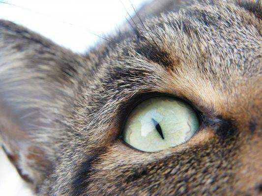 l'occhio...