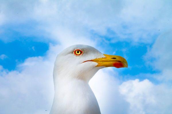 L'occhio della Natura