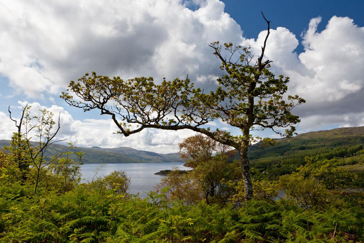 Loch Sunart, Schottland