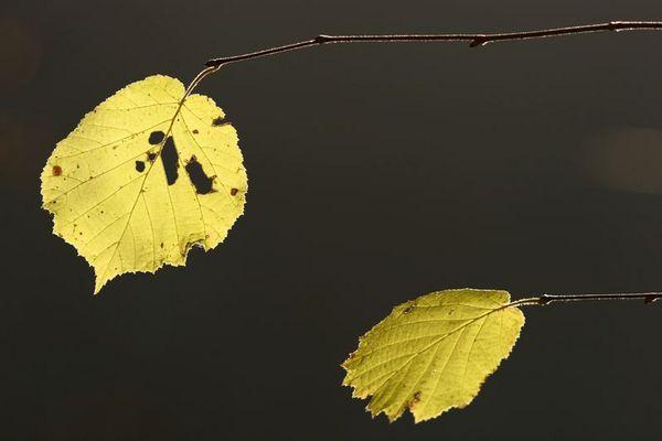 Löchrige Blätter