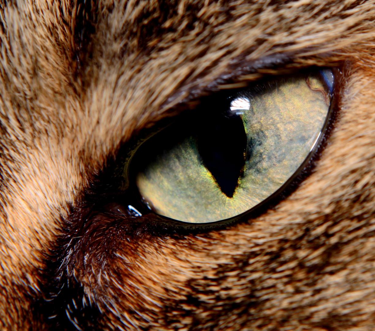l'oeil de Baya