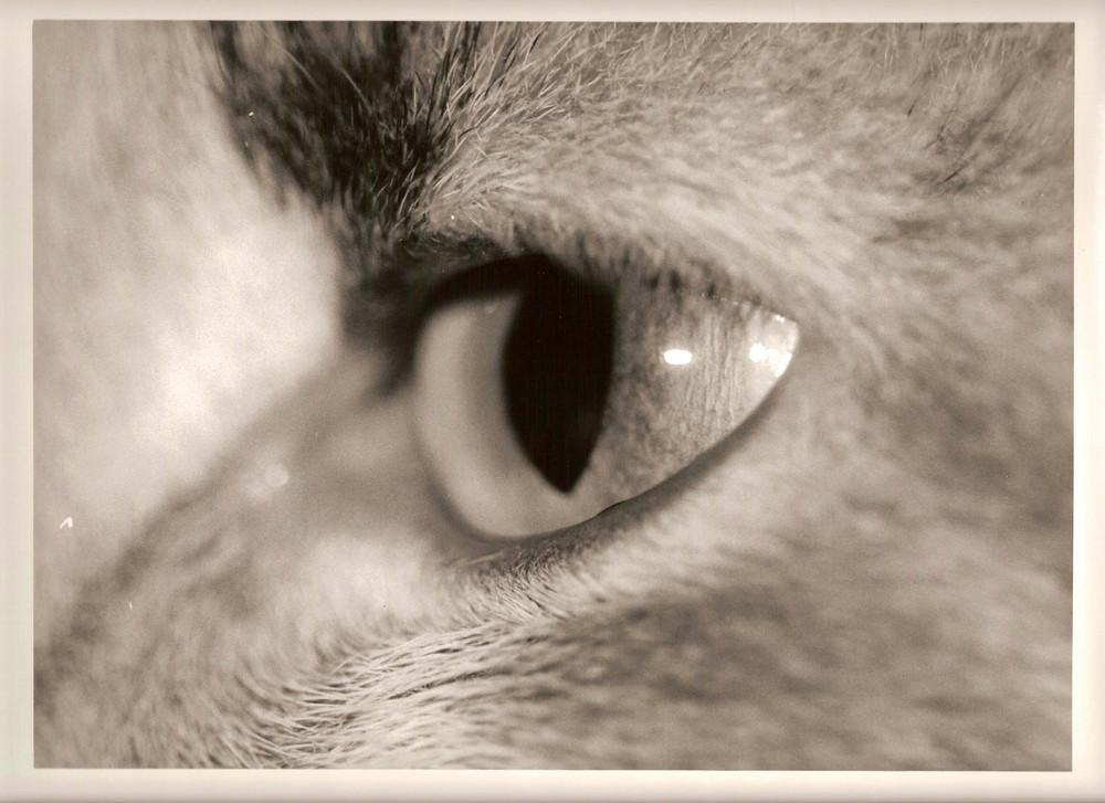 L'oeil de Tchoun