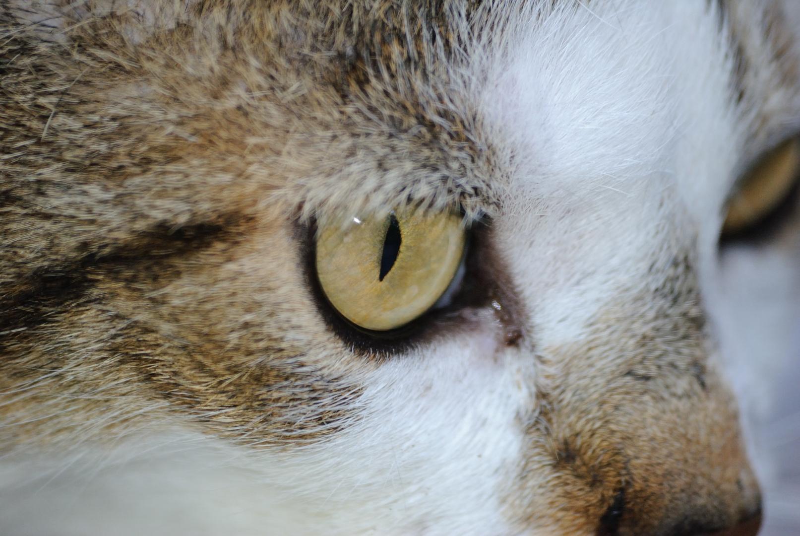 """L'oeil du """"tigre"""""""