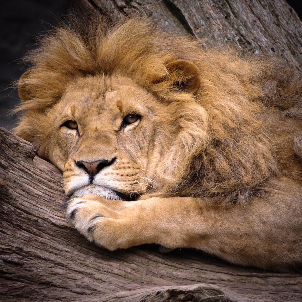 l we foto bild tiere zoo wildpark falknerei s ugetiere bilder auf fotocommunity. Black Bedroom Furniture Sets. Home Design Ideas