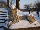 Löwe im Winter