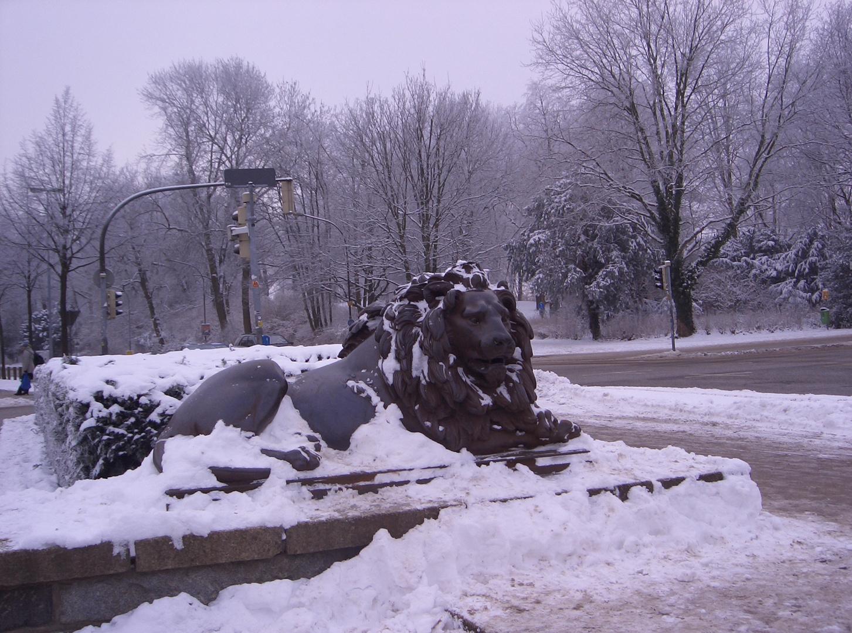 Löwe mit Schnee