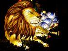 Löwen gab es auch zu sehen
