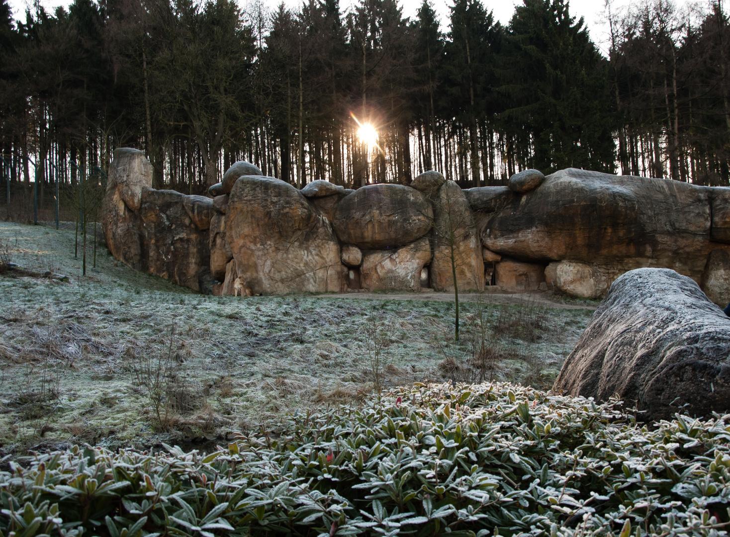 Löwengehege im Zoo Wuppertal im eiskalten Januar