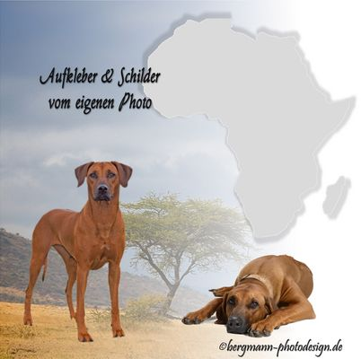 Löwenhunde