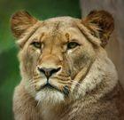 Löwenlady