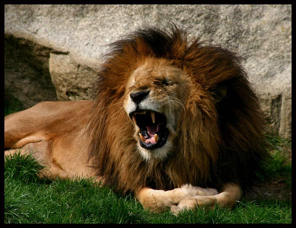 * LöwenMähne *