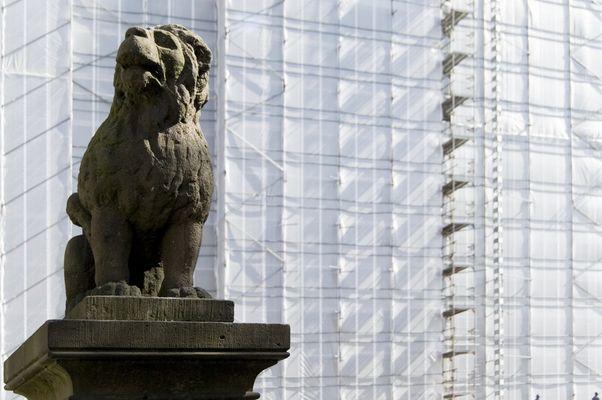 Löwenpudel