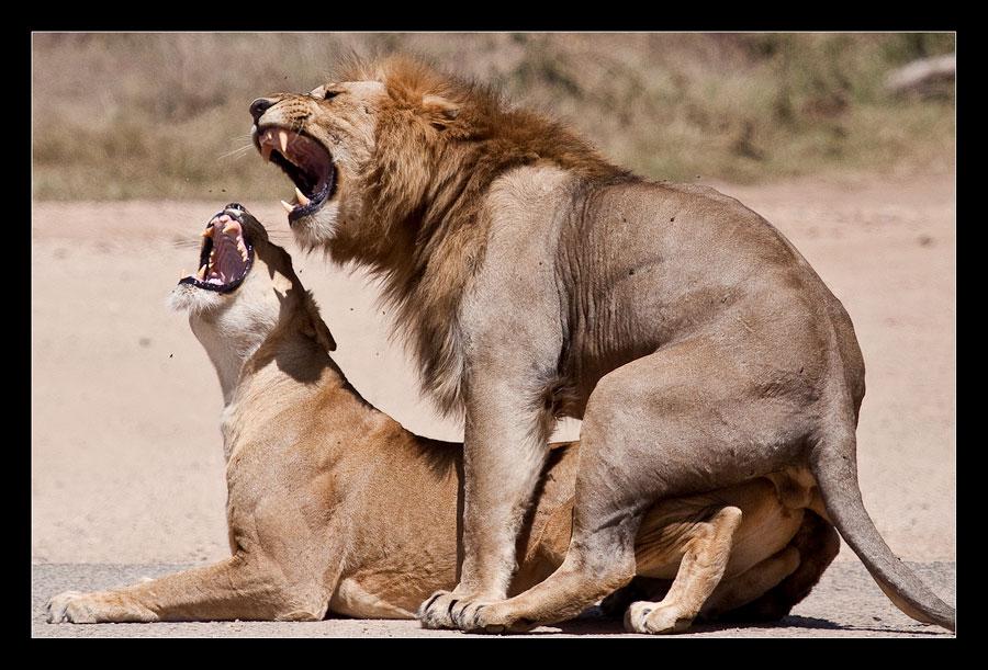 Löwensex