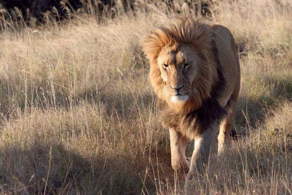 Löwentrail 1
