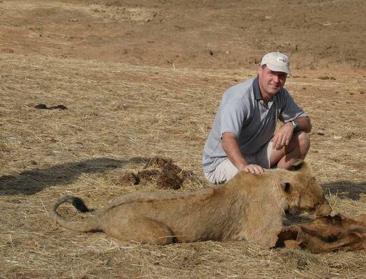 Löwin in freier Natur