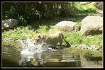 Löwin Luena aus dem Zoo Leipzig