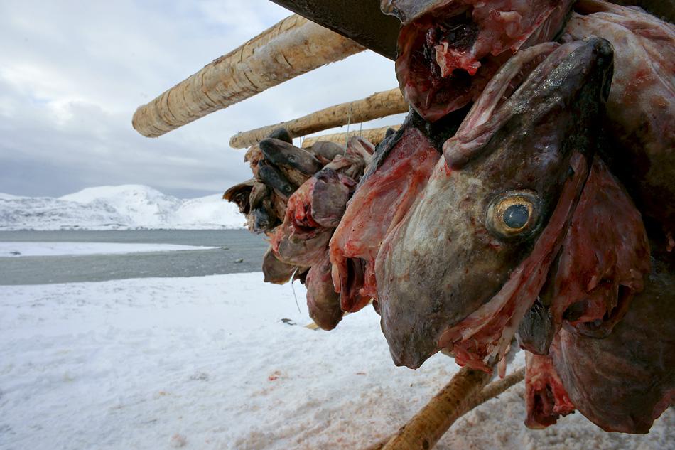 Lofoten im Winter – Kalter Fisch