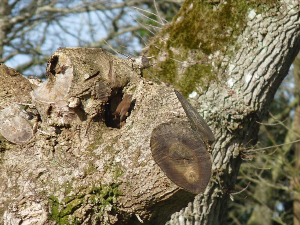 L'oiseau dans un arbre