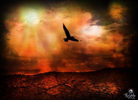 L'oiseau de feu
