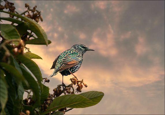 l'oiseau de saison