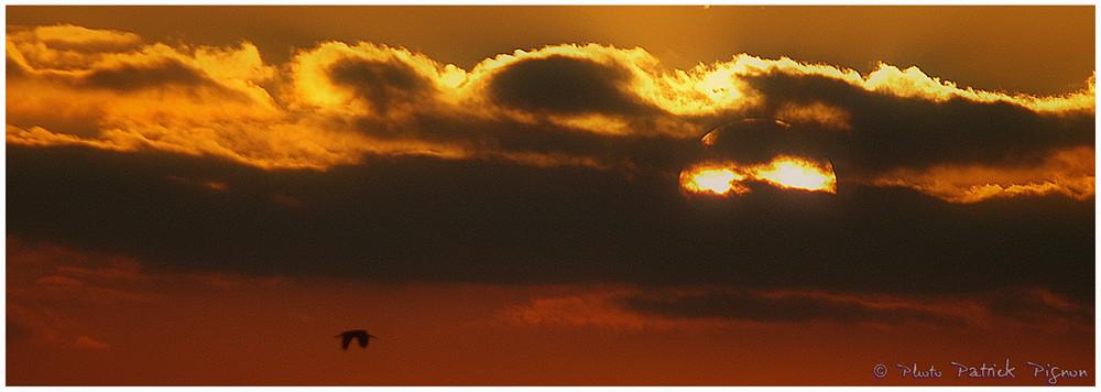 L'oiseau et le coucher du soleil