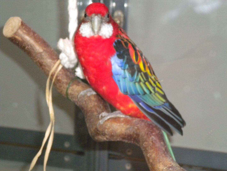l'oiseau et moi