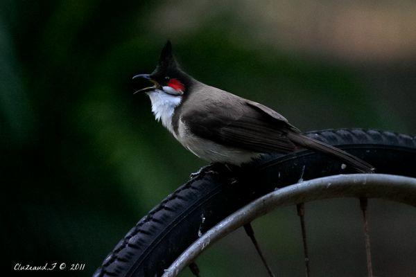 l'oiseau la réunion 02
