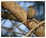 L'oiseau libre ............