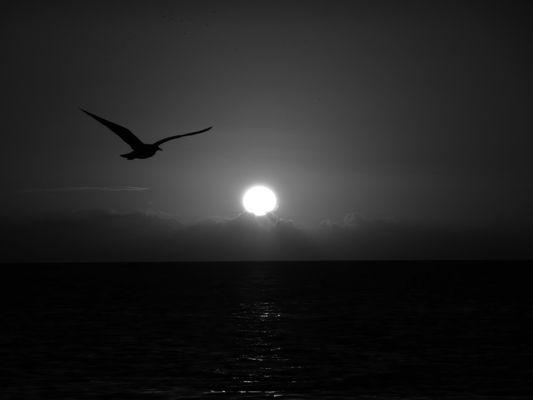 L'oiseau noir au soleil couchant