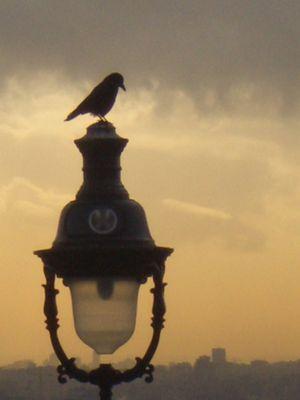 L'oiseau Perché
