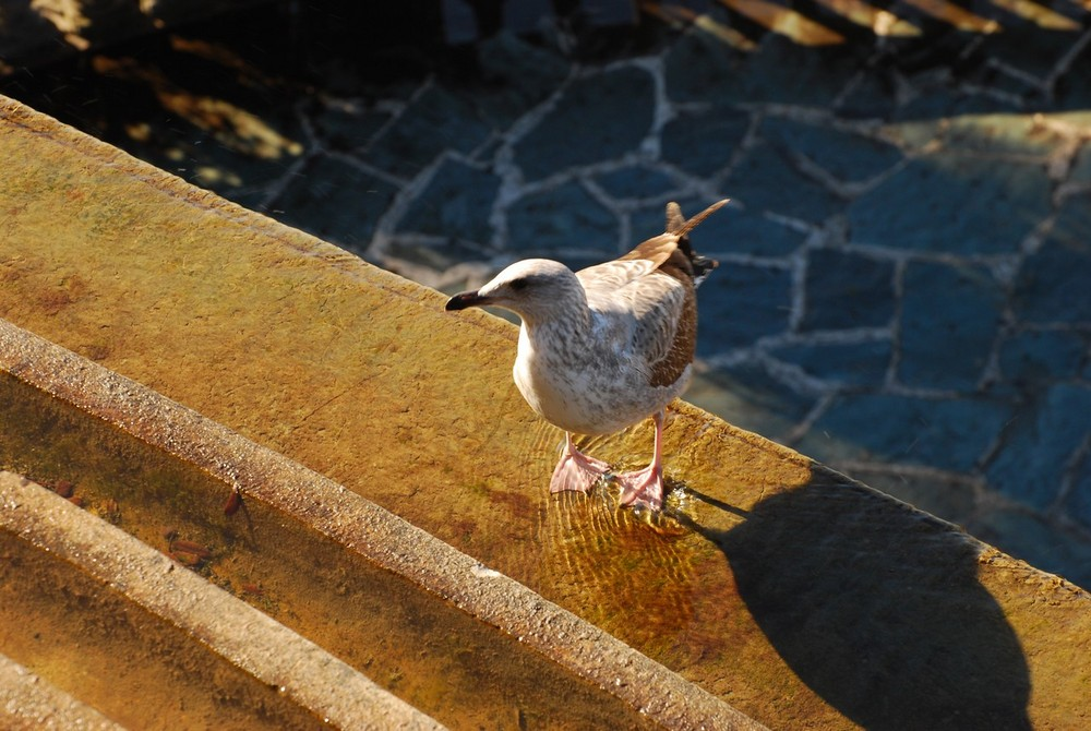 L'oiseau songeur