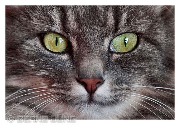 Lola Close_Up